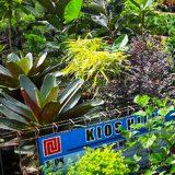 sentra tanaman hias gr